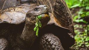 Двухметровую черепаху вымыло на пляж в Испании: видео
