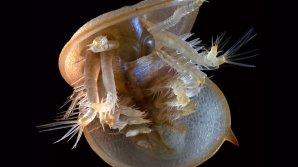 Ученые воссоздали облик кембрийского Чужого