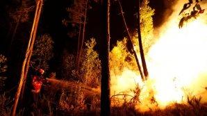 В штате Калифорния бушуют лесные пожары: началась эвакуация местных жителей