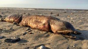 """После урагана """"Харви"""" на техасском пляже нашли загадочного монстра"""