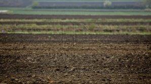 Нынешний год выдался более урожайным, чем прошлый