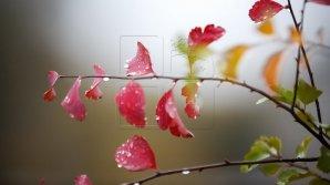 Синоптики: В ближайшие дни сохранится тёплая погода