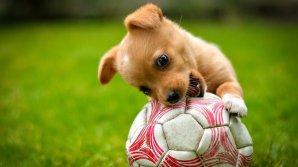Собака показала аргентинским футболистам, как надо обращаться с мячом