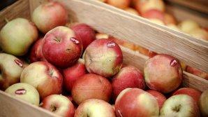 Садоводы представили богатый урожай яблок на фестивале в Сороках