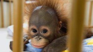В Екатеринбурге открылся детский сад для обезьян