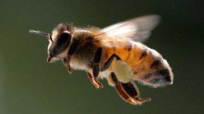 Пчелы покусали полторы сотни учеников китайской школы