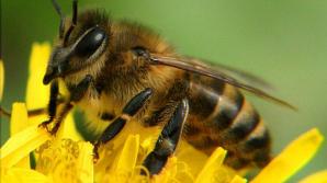 Человек с бородой из пчёл побил мировой рекорд