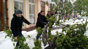Предприниматель из Яловен построил бизнес на ветках, поваленных апрельским снегопадом