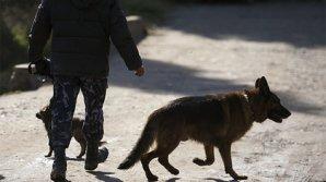 Собака принесла в бурятское село ногу предполагаемого убийцы