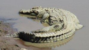 Крокодил на Шри-Ланке растерзал британского журналиста