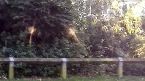 Британка сфотографировала в парке летающих фей