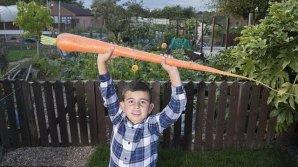Садовод-любитель вырастил морковь длиной со своего 6-летнего внука