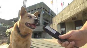 Видео: Овчарка баллотируется в мэры канадского города Сент-Джонс