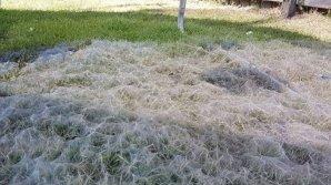 Пауки соткали гигантскую паутину во дворе австралийской семьи
