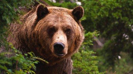 Туристы спасли попавшую в ловушку медведицу на Сахалине
