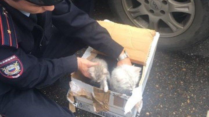 В Казани эвакуировали офис из-за коробки, в которой саперы нашли котят