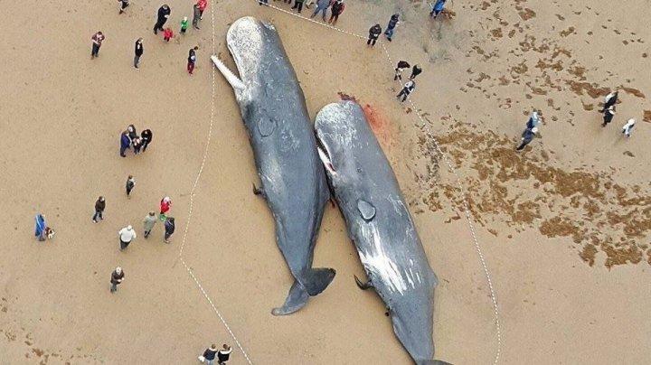 Северное сияние заставило китов выброситься на берег