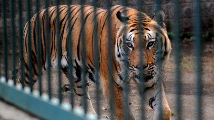 """Швейцарским зоопаркам отдают """"ненужных"""" домашних питомцев на корм диким зверям"""