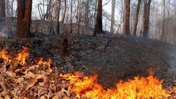 Появилось видео тушения лесных пожаров в Дагестане