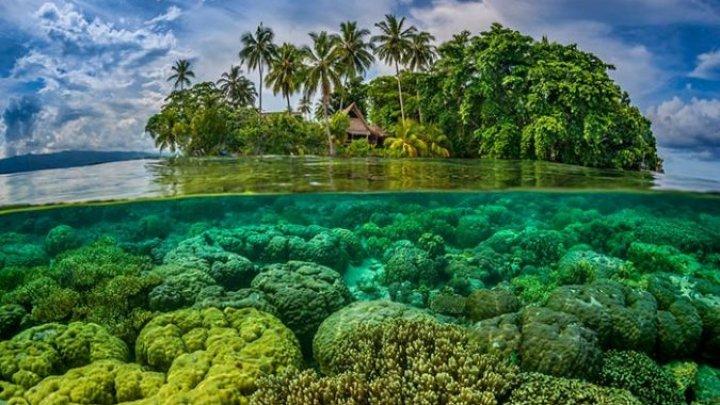 На Соломоновых островах нашли мифическое животное: фото