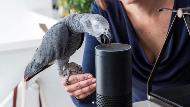 Попугай звуком хозяйки сделал заказ в электронном магазине