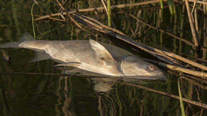 На Рышкановке в одном из озер погибла рыба