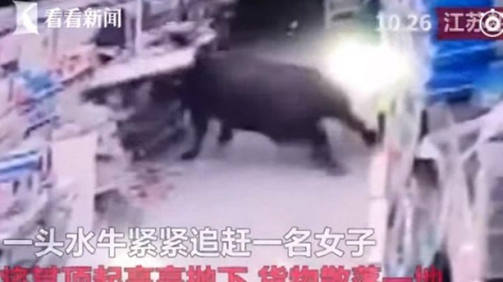 В Китае разъяренный буйвол разгромил супермаркет