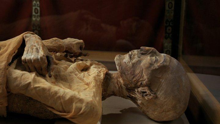 Ученые раскрыли тайну, которую хранила древняя египетская мумия из Эрмитажа