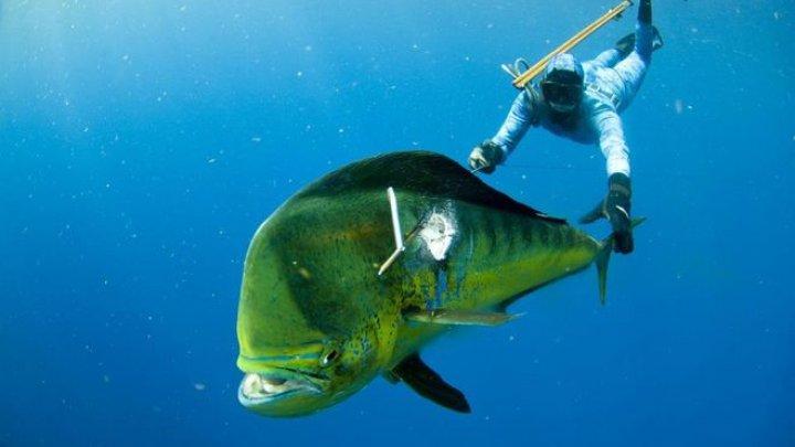 Рыбаки достали из рыбы-гиганта 32 черепахи: видео