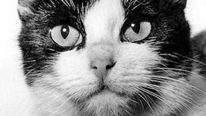 Во Франции хотят поставить памятник первой космической кошке, усыпленной ради науки