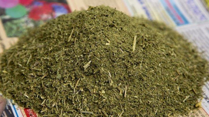 В Уругвае разрешили лечиться марихуаной