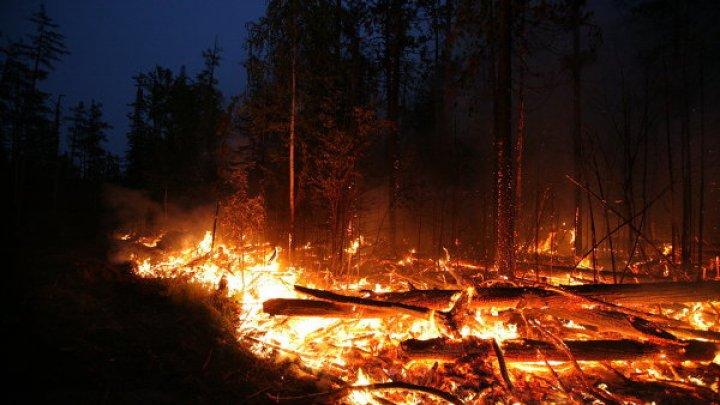 Чрезвычайный уровень пожарной опасности объявили на Украине