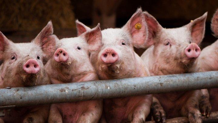 В Брянской области погиб человек при обрушении кровли свинофермы