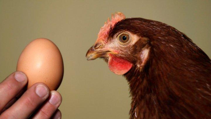 Ученые заставили куриц нести целебные яйца