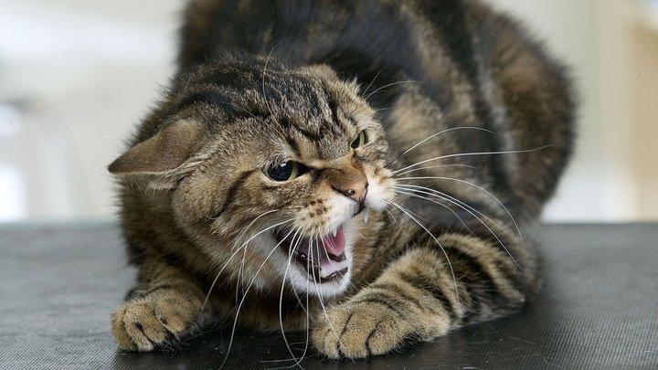 Американец лишился пальцев, заразившись чумой от своего кота