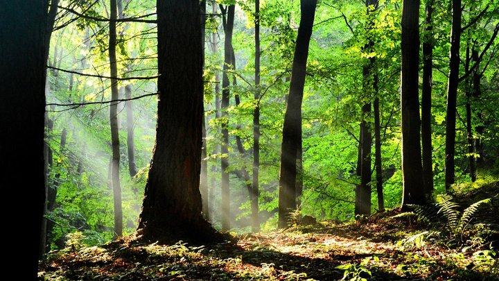 Заблудившиеся женщина с сыном провели десять дней в лесу без еды