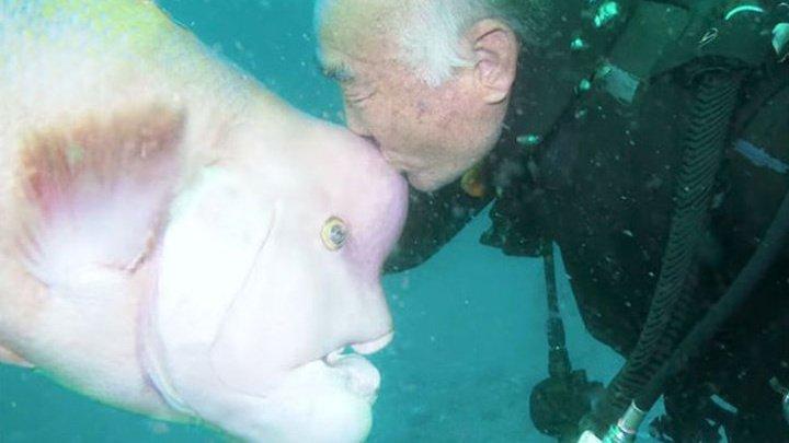 Японец 30 лет дружит с рыбой, чья голова похожа на человеческую