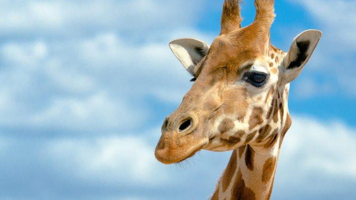 Жираф помог парню сделать предложение руки и сердца: фото