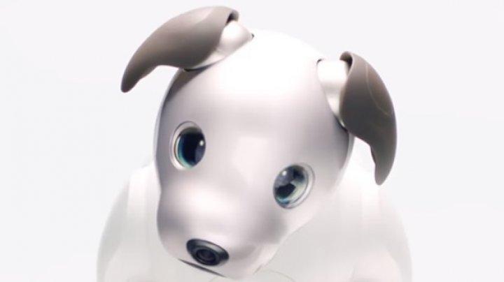 Sony создала робота-собаку с OLED-глазами