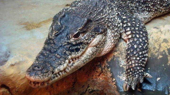 В Австралии крокодил покусал туристку на пляже