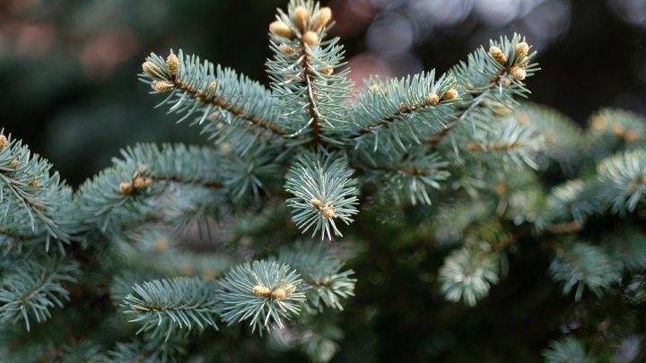 В Якутии слепили новогоднюю елку из навоза: фото