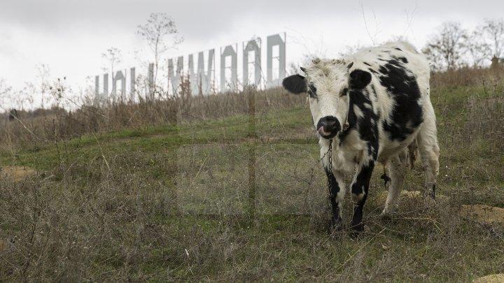 """""""Ноllywood"""": символ фабрики грёз появился в Каушанском районе"""