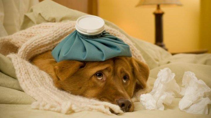 В США собака притворялась больной, чтобы привлечь внимание хозяев