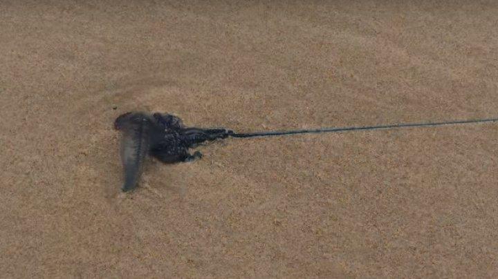 На пляже в Австралии нашли существо с огромным ядовитым жалом