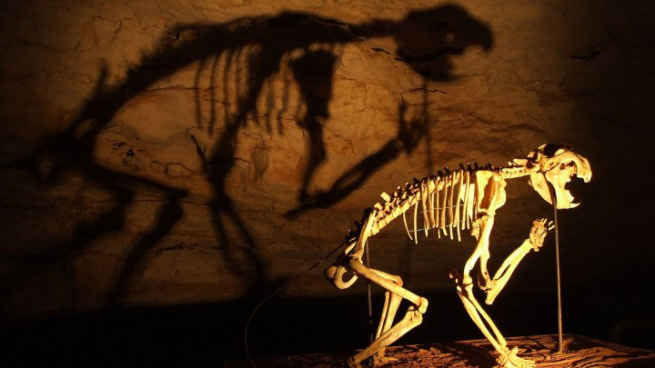 Учёные обнаружили останки сумчатого льва, похожего на кенгуру