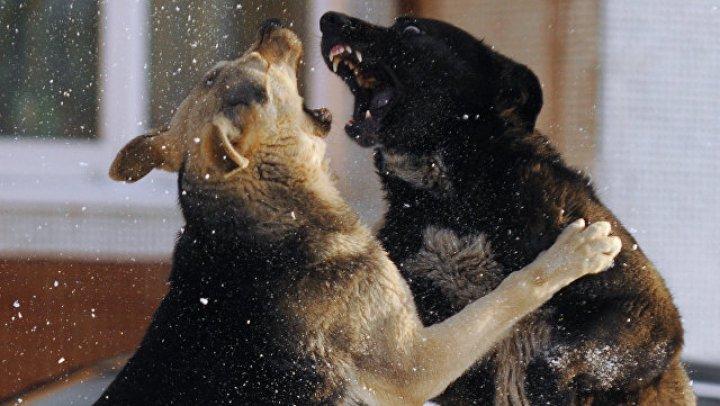 В Подмосковье младенца загрызли собаки