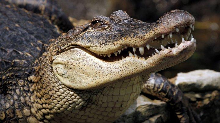 На Филиппинах крокодил съел мужчину, который пытался укрыть лодку от шторма