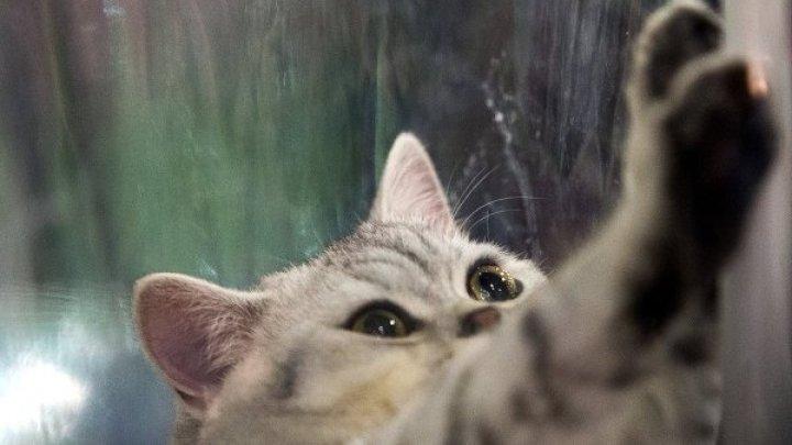 Во Вьетнаме кот научился открывать запертые двери: видео