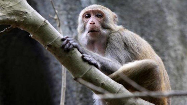 Женщина спровоцировала ДТП, перепутав светофор с задом обезьяны: фото