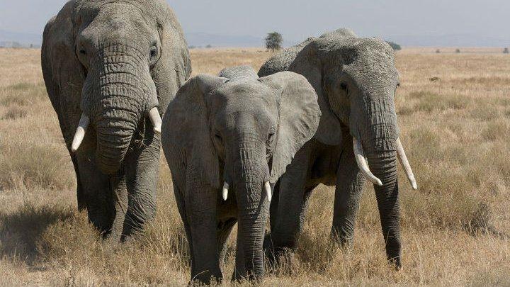 В Индии поезд задавил сразу пять слонов